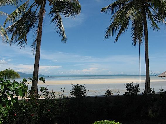 A beautiful beach with two palm trees