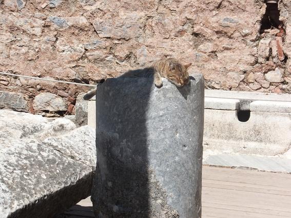 Cat sleeping on the ruins of Ephesus