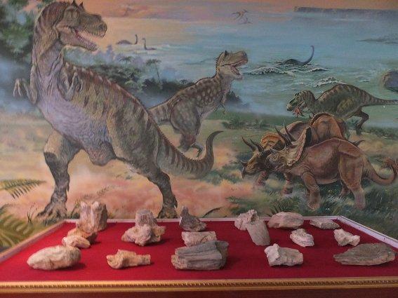 Dinosaur bones in Sainshand museum