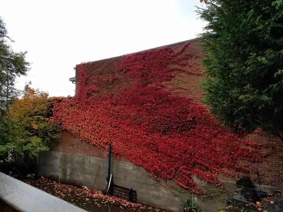 Beautiful fall colors in Seattle