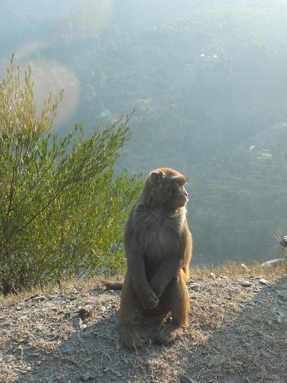 Innocent looking monkey