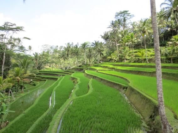 Steep, terraced rice patty