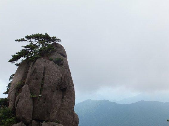 Tree atop Huangshan